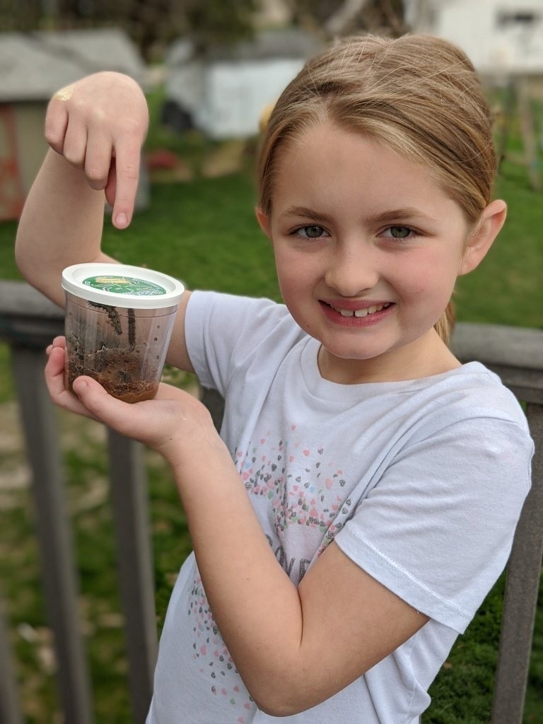 Marlee's science project-caterpillars to butterflies